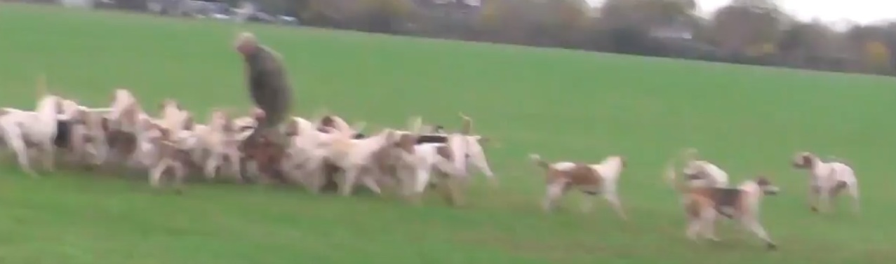 AshfordValleyFHFoxkilledTerriermanretrievescarcass11-11-17.jpg